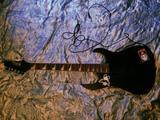 Продам гитару и комбоусилитель (один лот)