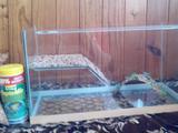 Аквариум на 20 литров для черепашек